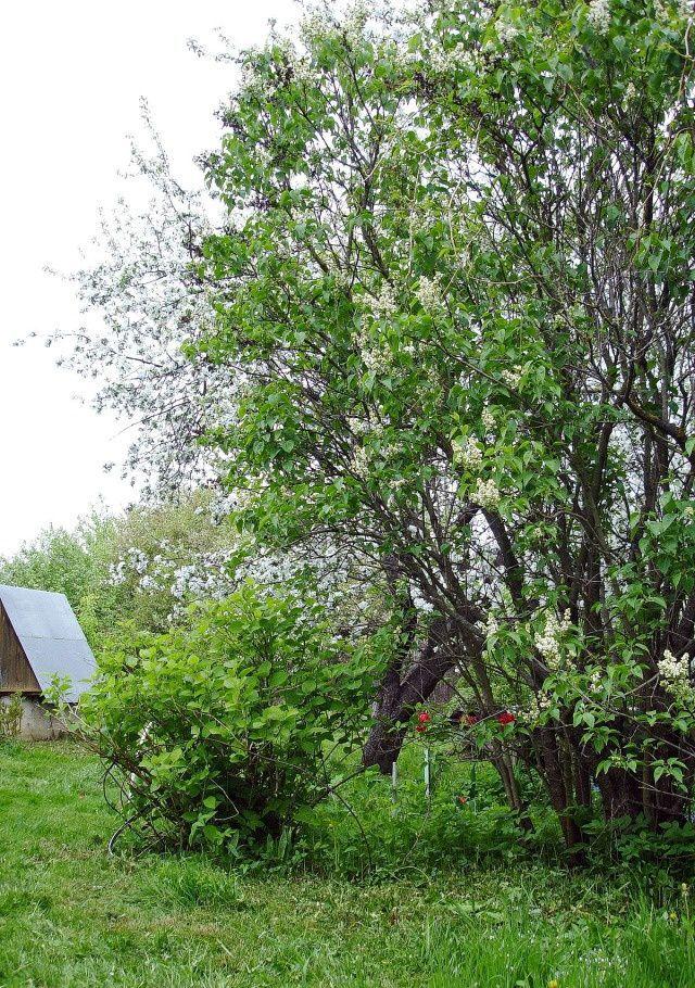 Аренда дома деревня Федюково, цена 25000 рублей, 2020 год объявление №571613 на megabaz.ru