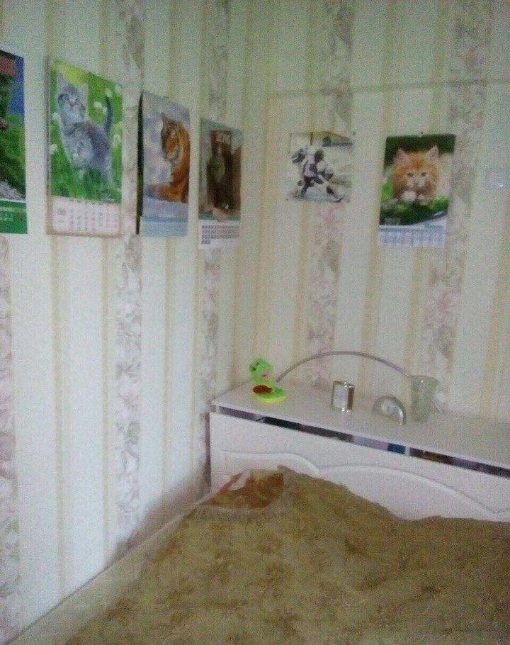 Снять двухкомнатную квартиру в Москве у метро Перово - megabaz.ru
