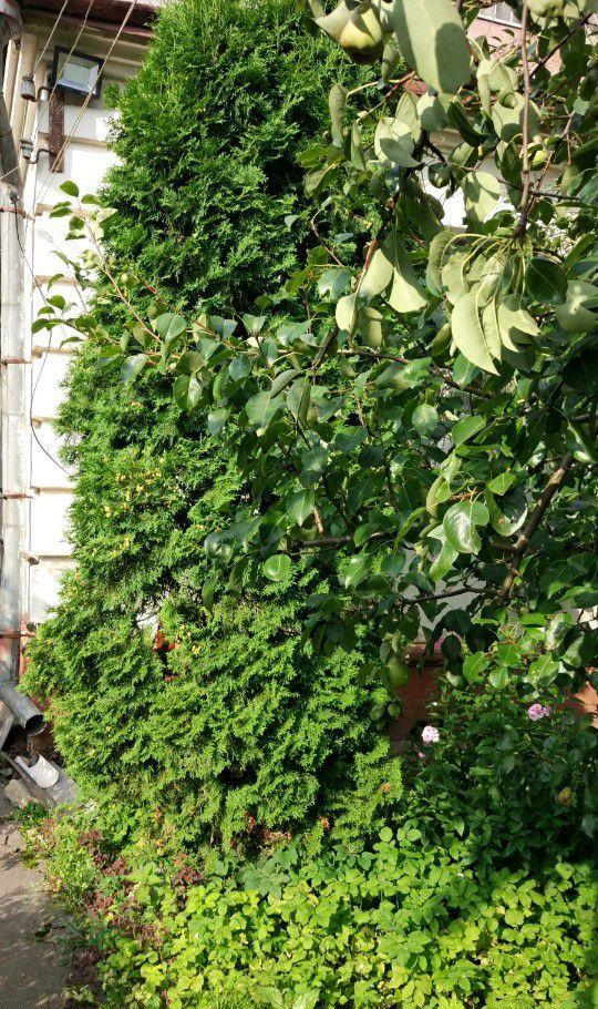 Продажа дома поселок городского типа Загорянский, улица Нахимова 27, цена 4500000 рублей, 2020 год объявление №316061 на megabaz.ru